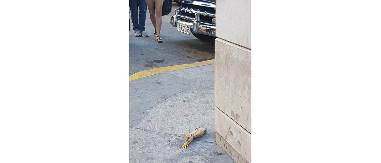 Pic of chicken leg
